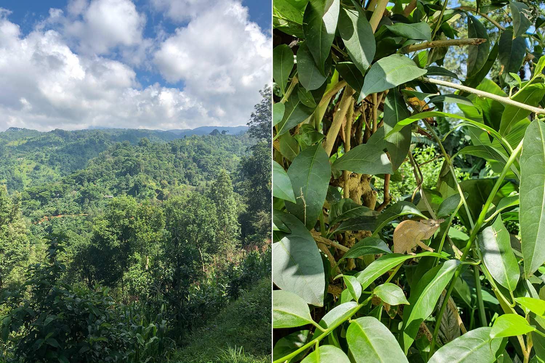 im dicht grünen Dschungel versteckt sich so manches Tier