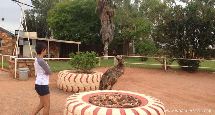 uluru-outback-tour-emu-chi