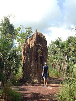 litchfield-park-termiten-olli