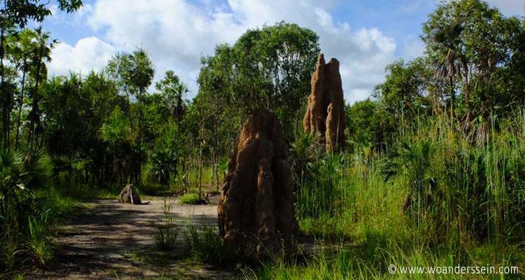 litchfield-park-termiten