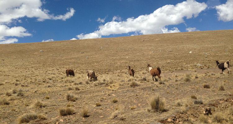 Chacaltaya bei La Paz in Bolivien