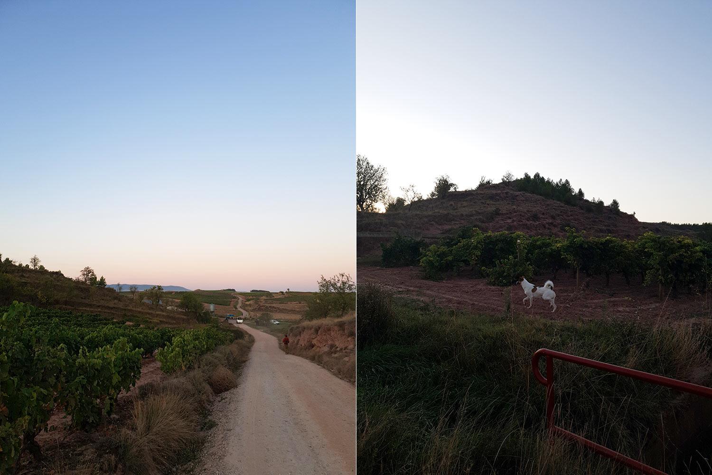 jakobsweg unterwegs mit Hund