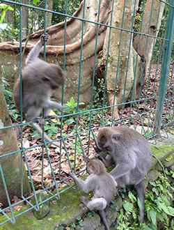 ubud2-monkey-forest
