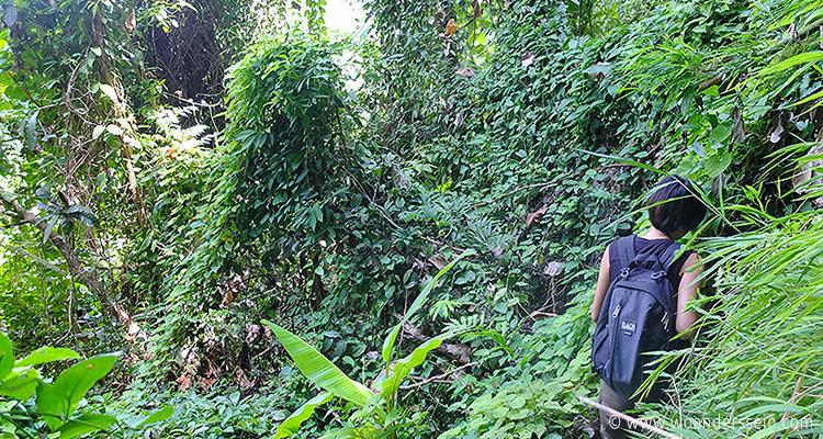 chiang-mai-trekking-chi4