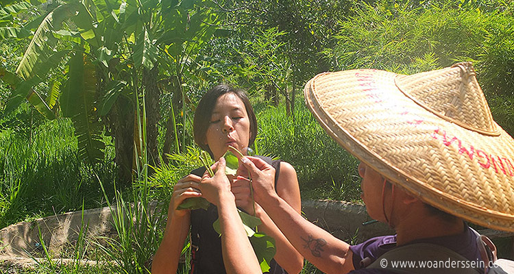 chiang-mai-trekking-chi7