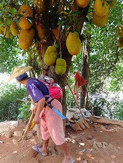 chiang-mai-trekking-guide