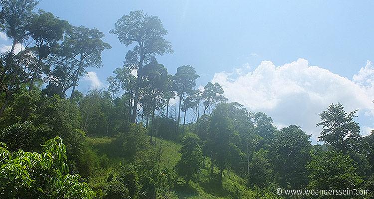 chiang-mai-trekking11