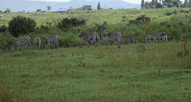 Reisetipps Arusha Nationalpark