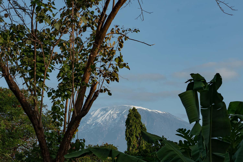 immer im Blick, der aussergewöhnliche Kilimandscharo