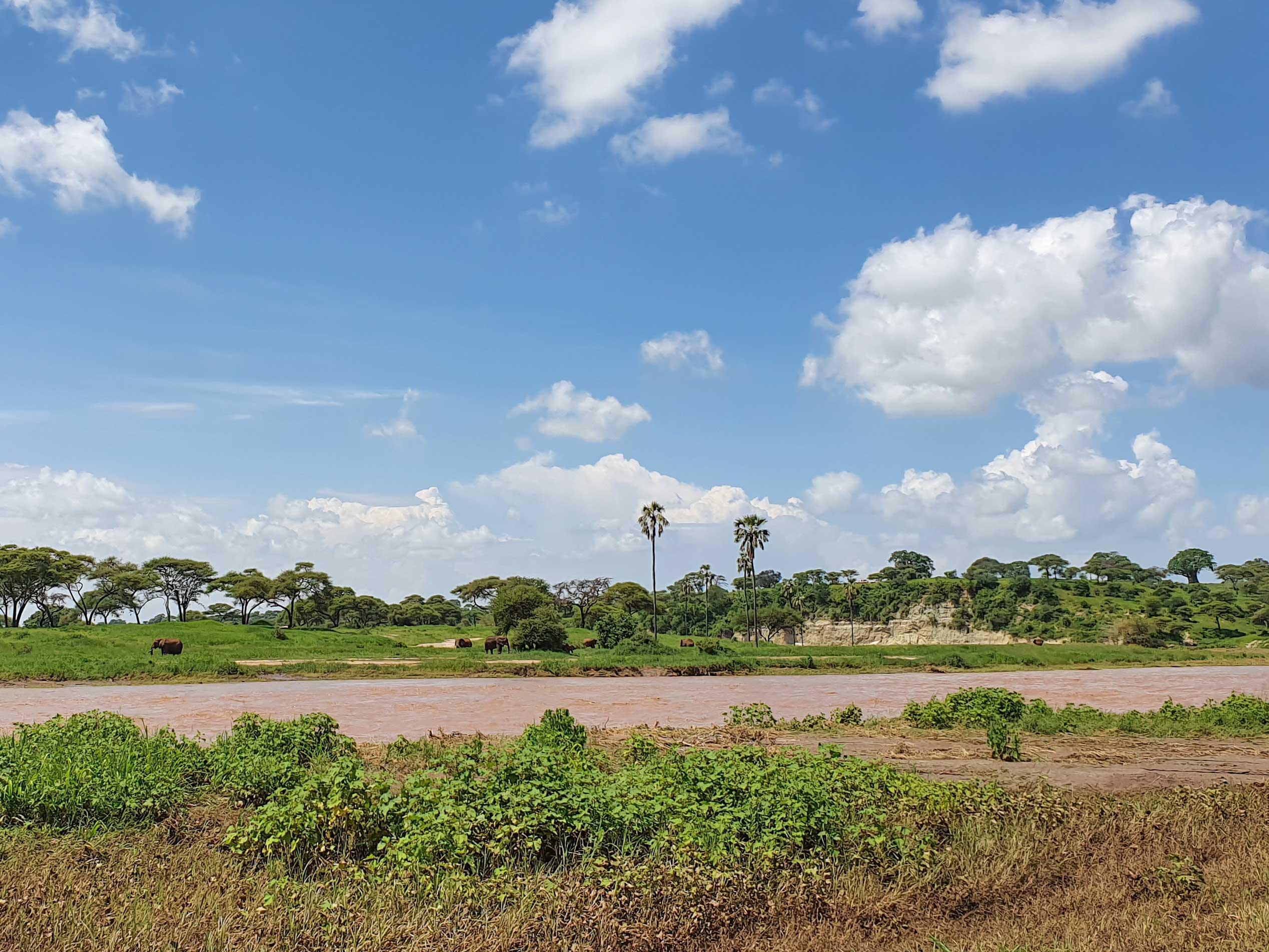 Safari im Tarangire Nationalpark