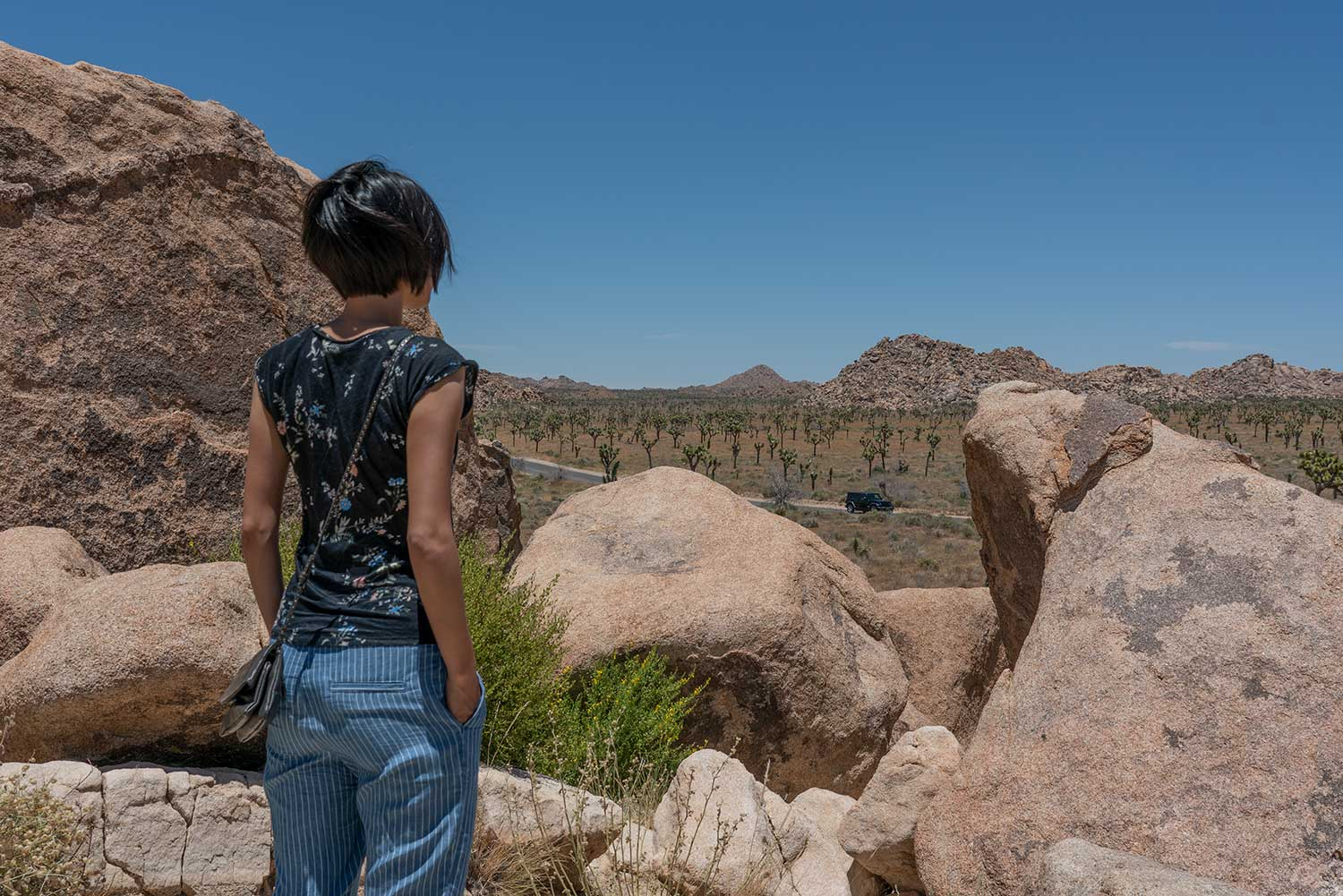 Roadtrip USA - Joshuatree