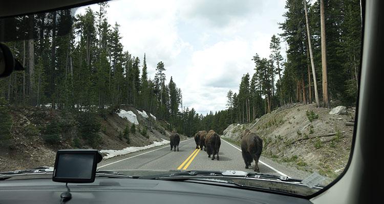 Reisetipps Yellowstone National Park