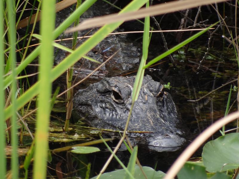 sharkvalley_aligatorimwasser2